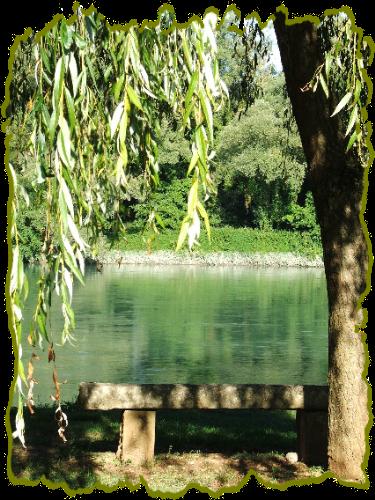 photo-bord-du-rhone